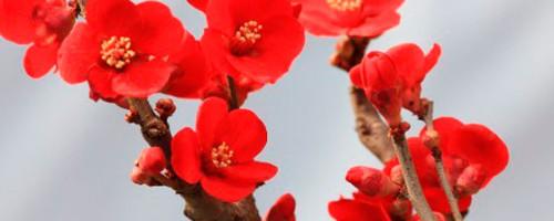 Red de Oración: Acción de gracias por el año 2013